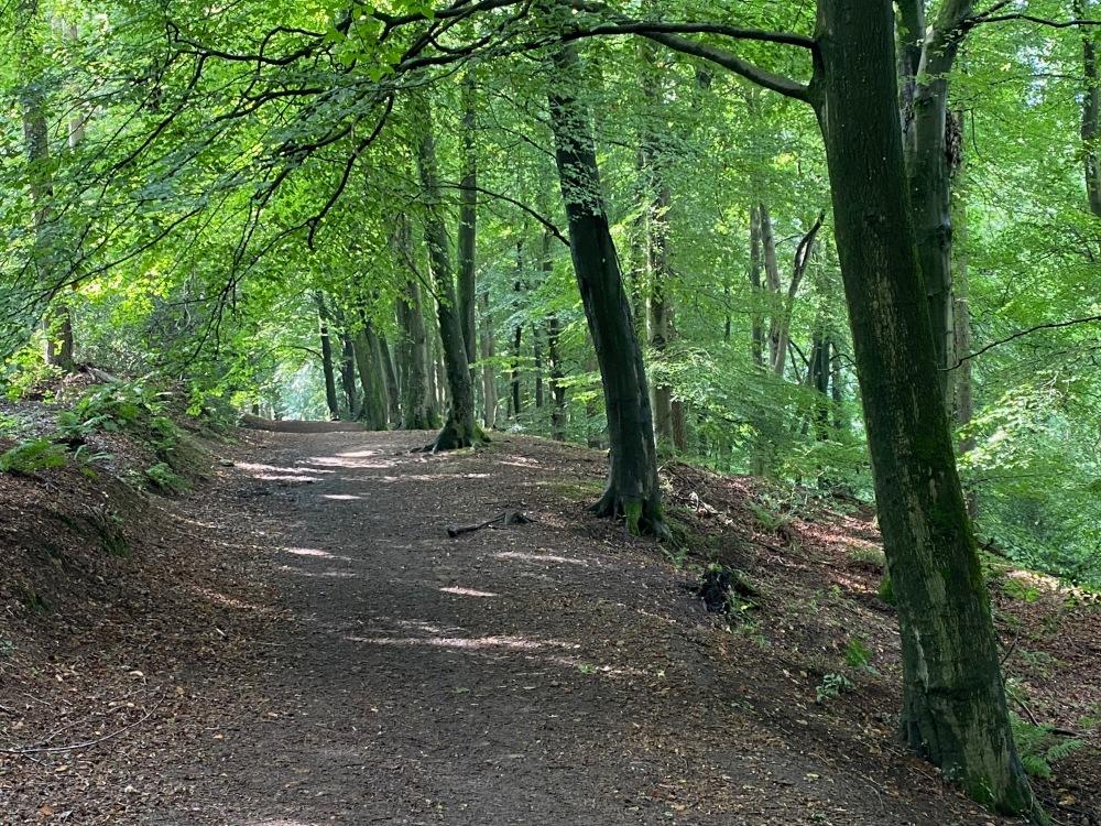Walk through the Forest of Dean